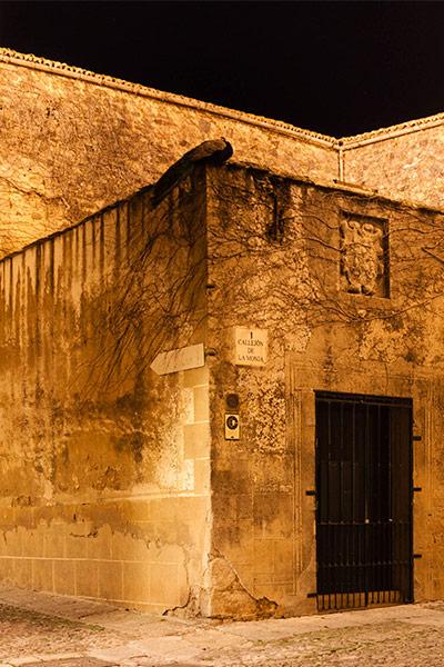 Pavo Real durmiendo en la Ciudad Vieja de Cáceres