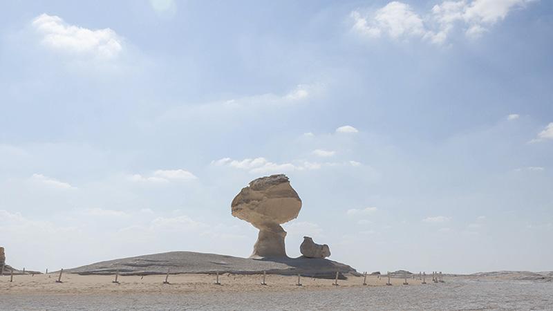 Egipto - Desierto blanco: árbol y gallina